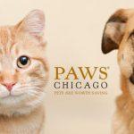 PAWS - pets are worth saving